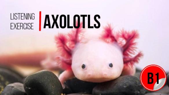 B1 Listening – Axolotls | My Little English Page